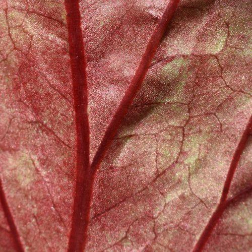 mens/plant